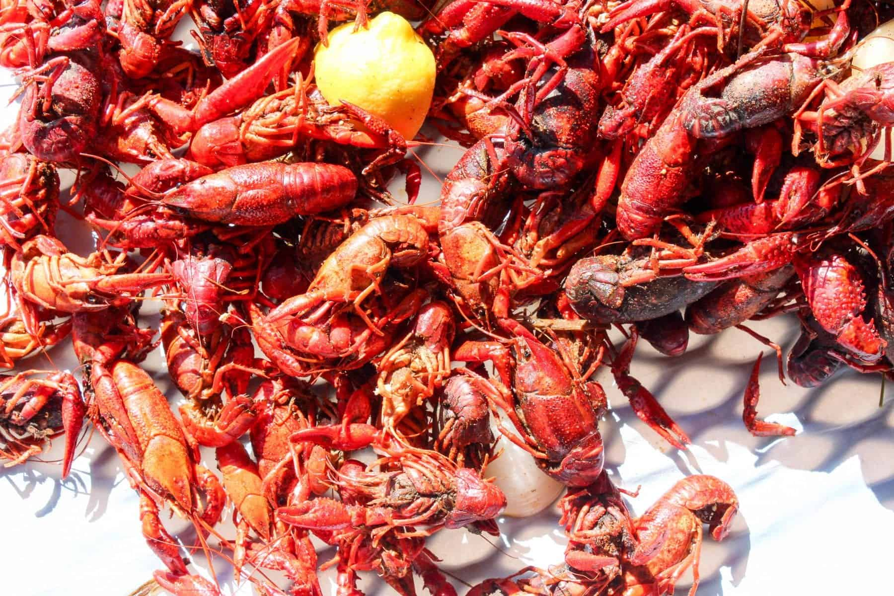 Authentic Louisiana Crawfish Boil - Blackberry Babe